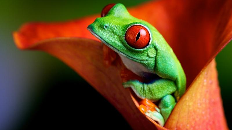 Fertigteich kaufen anlegen Frosch